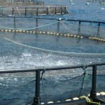 proyecto para piscifactoria
